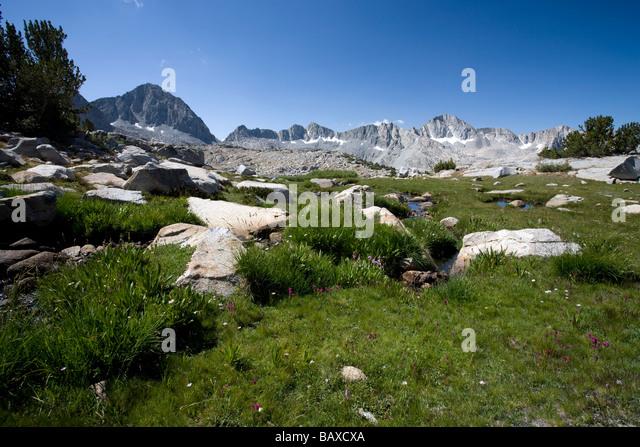 High Alpine Meadow near Bishop Pass - Eastern Sierra, California. - Stock Image