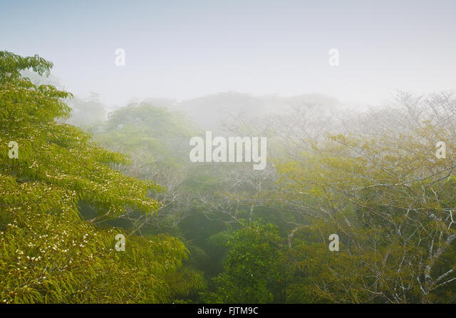 Misty rain forest at sunrise in Soberania national park, Republic of Panama. - Stock-Bilder
