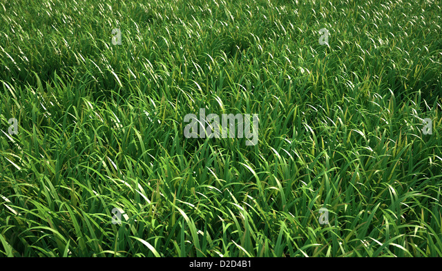 Grass meadow computer artwork - Stock Image