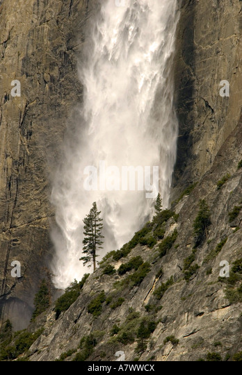 Yosemite Falls waterfall lone pine tree - Stock Image
