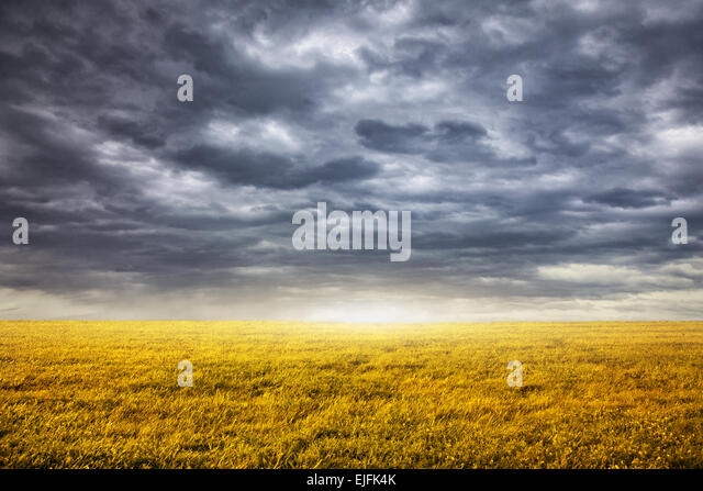 Field with yellow grass at overcast dramatic sky background - Stock Image