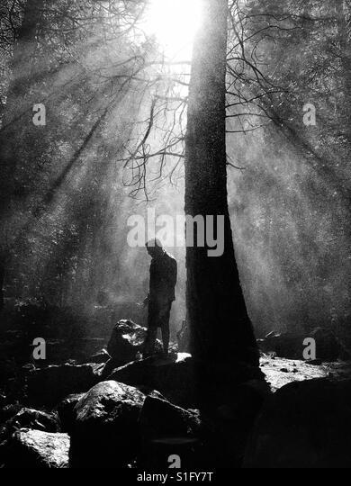 Silhouette of man by tree - Stock-Bilder