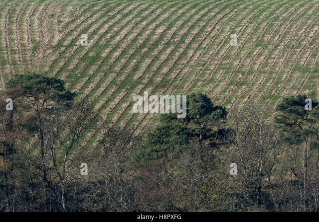Telephoto shot of recently harvested (4 to 6 weeks previous) hillside arable field / farmland. - Stock Image