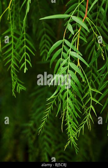 green leaf background with selective focus - Stock-Bilder
