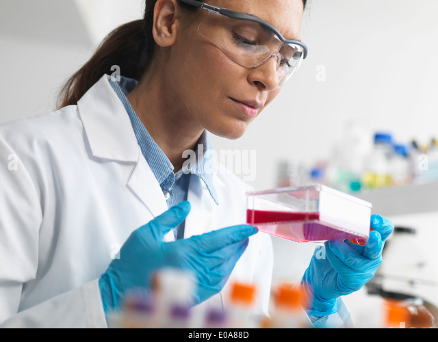 Cell biologist holding a flask containing stem cells, cultivated in red growth medium, to investigate diseases - Stock Image