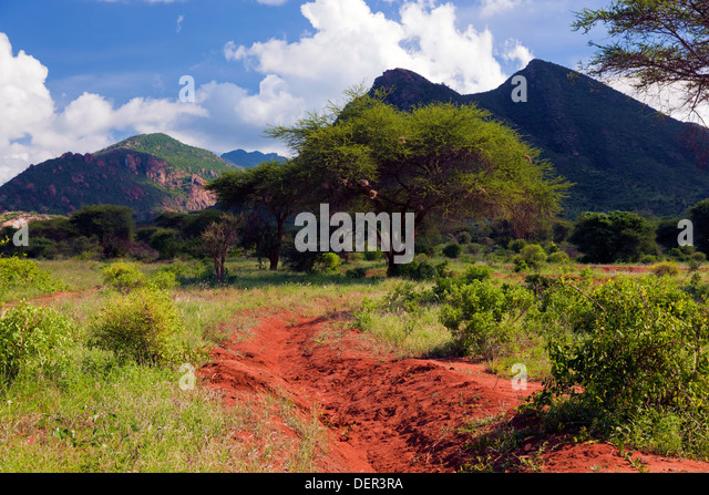 Tsavo West National Park, Kenya, Africa - Stock Image