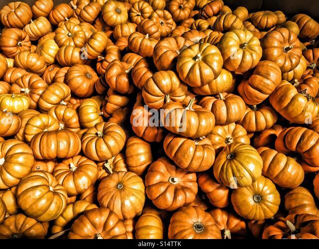 Mini Pumpkins - Stock-Bilder