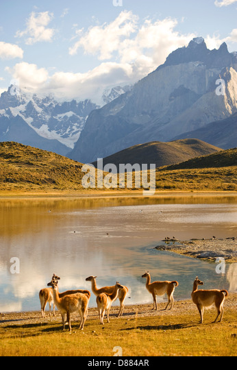 Torres del Paine National Park, Chile - Stock Image
