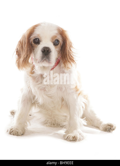 cavalier divorced singles Single taken engaged married  obviously jacob's been more than a little cavalier with his  the one big truth both men and women need to realize about divorce.