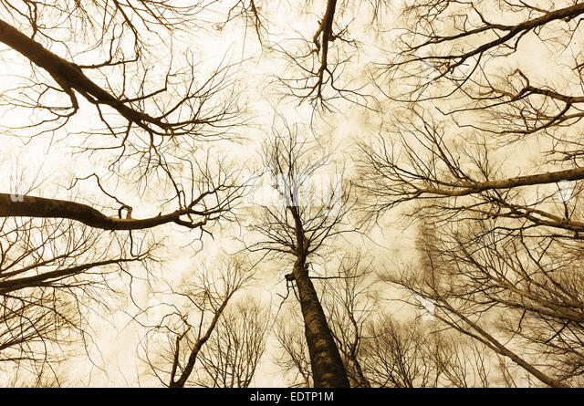 horror forest with a directly below persective - Stock Image