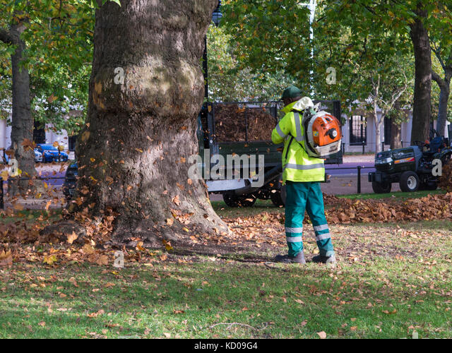Leaf collecting in an autumnal St James Park - Stock Image