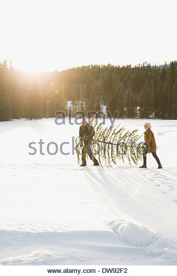 Couple walking with Christmas tree outdoors - Stock-Bilder