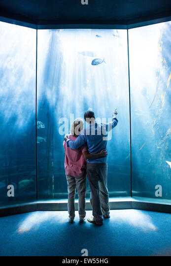 Wear view of couple looking at fish in the tank - Stock-Bilder