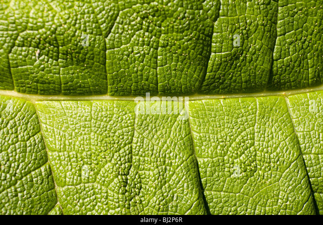 Leaf macro detail - Stock Image