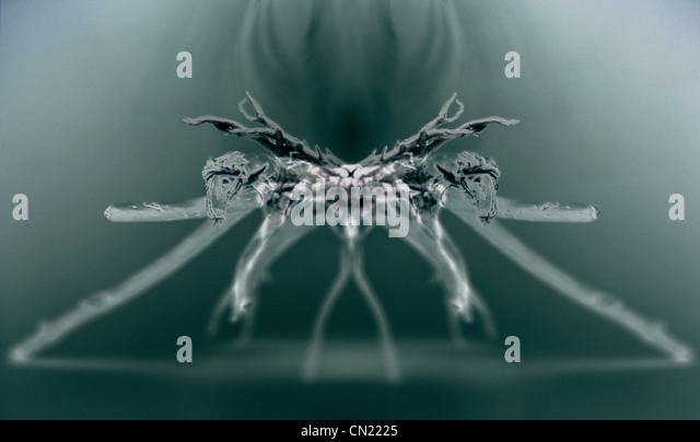 X-ray image of a spider - Stock-Bilder