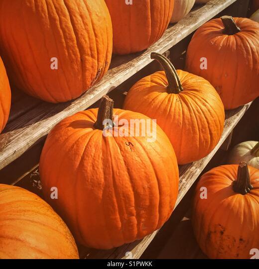 Thanksgiving pumpkins on display at a farm market. - Stock Image