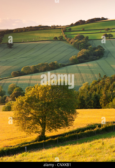 Rolling farmland in summertime, Devon, England. Summer (June) 2011. - Stock Image
