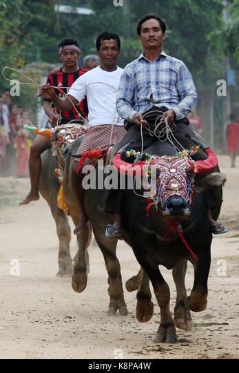 Kandal. 20th Sep, 2017. People urge their buffaloes forward during an annual water buffalo race at Vihear Sour pagoda - Stock Image