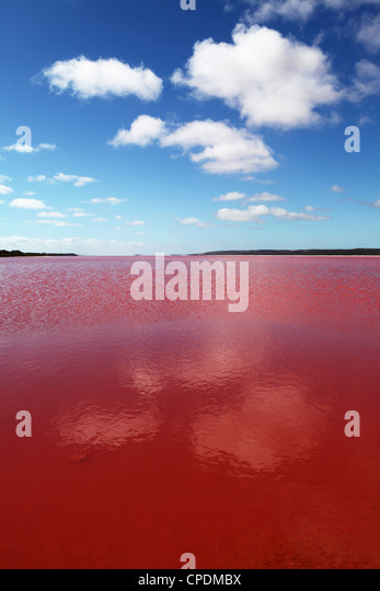 Edible algae provides a pink hue to the Hutt Pink Lagoon, Port Gregory, Western Australia, Australia, Pacific - Stock Image