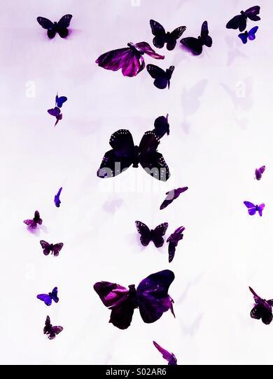Purple Butterflies - Stock Image