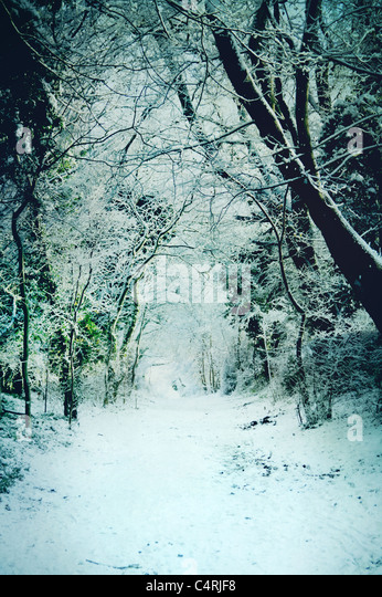 snow covered path through woods - Stock-Bilder