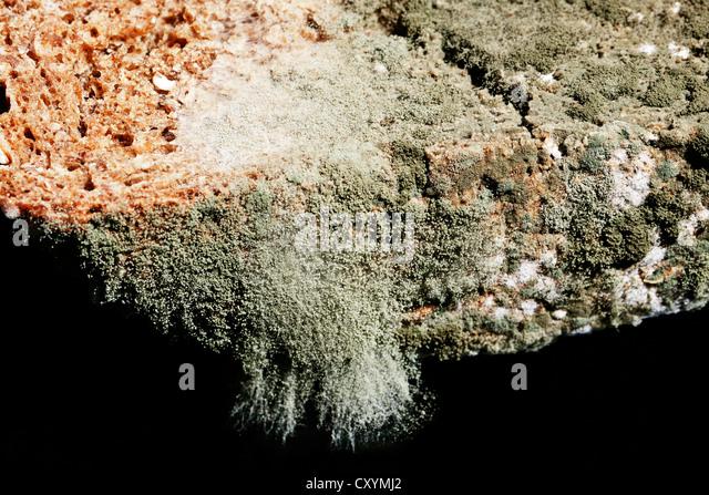 Mold Spores Stock Photos Amp Mold Spores Stock Images Alamy