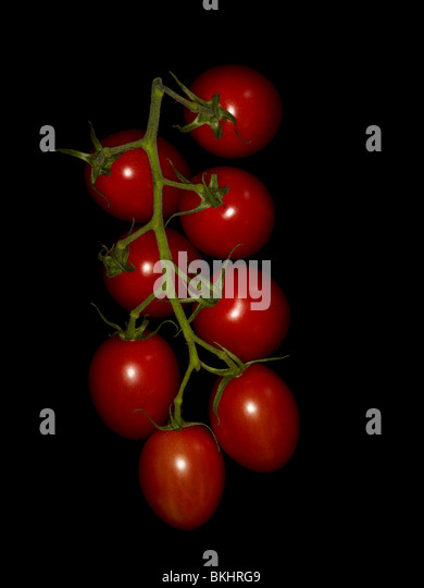 Cherry tomato vine on black background lit by a ringflash. - Stock Image