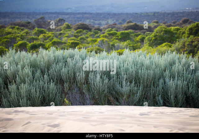 South Australia West Coast - Lincoln National Park - Stock-Bilder