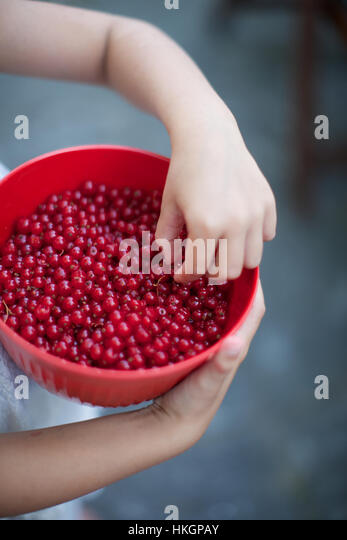 hands holding bowl of red currant. ripe, berries, child, food. - Stock-Bilder