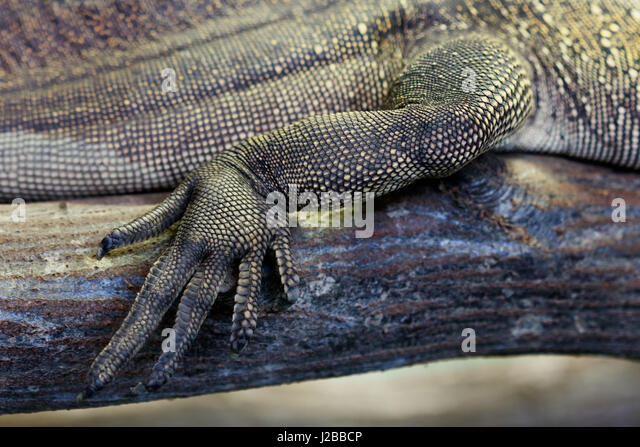 Skin Dragon Stock Photos Amp Skin Dragon Stock Images Alamy