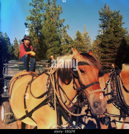 Cowboy sitting in horse drawn carriage - Stock Image