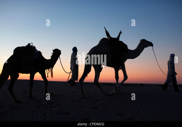 Camel drivers at dusk in the Sahara desert, near Douz, Kebili, Tunisia, North Africa, Africa - Stock Image