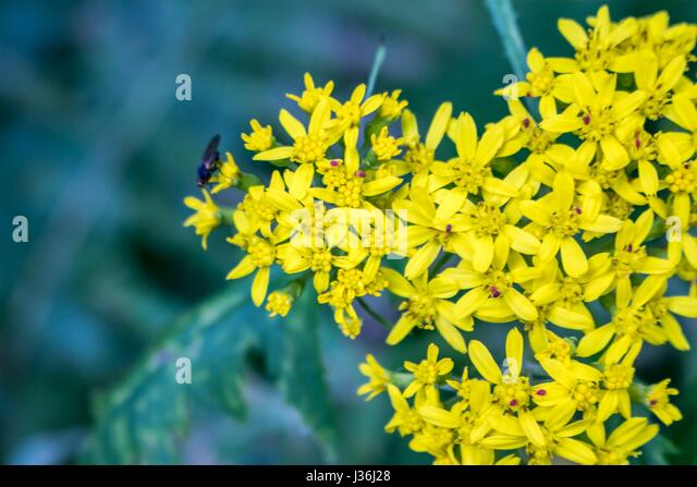 The Soulful Flowers - Stock Image