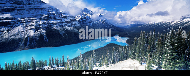 Elevated view over Peyto Lake which is coloured by glacial silt in Banff / Jasper National Parks, Alberta, Canada - Stock Image