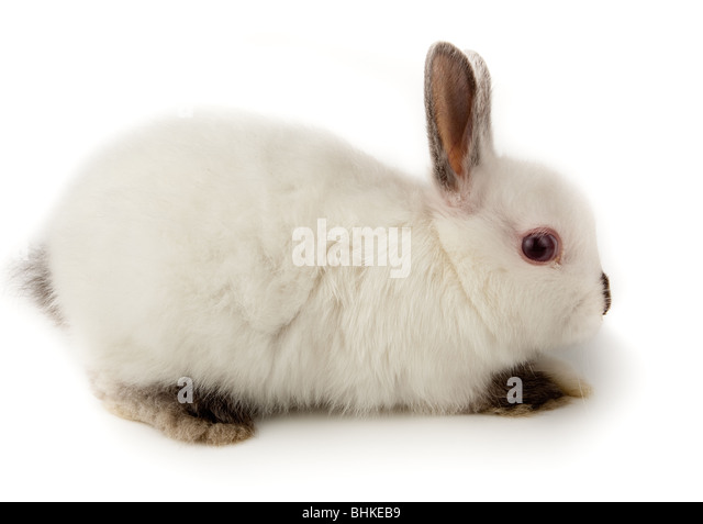 Nice white rabbit. It is cut out on a white background. - Stock Image