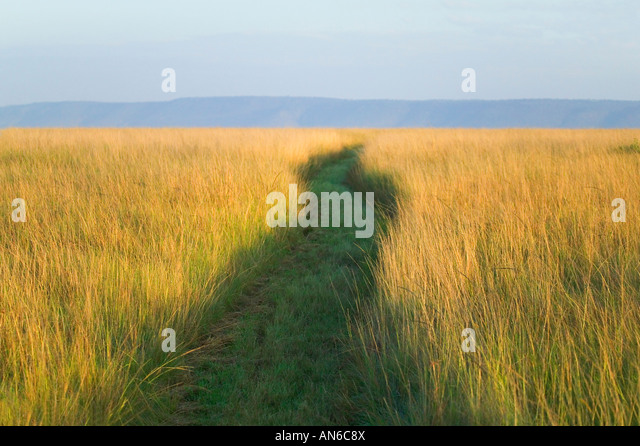 Path among tall grass on the savannah, Masai Mara, Kenya - Stock Image