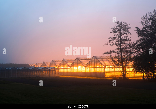 The Netherlands, Marknesse, Greenhouses for bulb  and flower culture. - Stock-Bilder