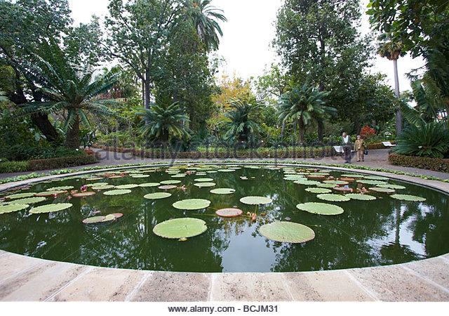 Schwimmpflanze stock photos schwimmpflanze stock images for Jardin botanico de tenerife