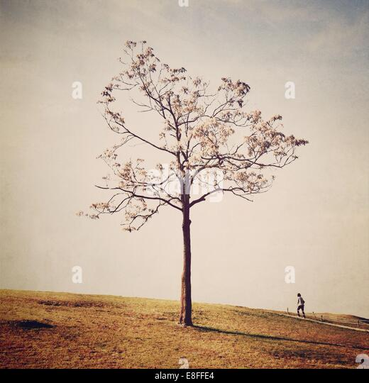 South Korea, Seoul, Wiryeseonggil, woman standing in front of autumnal tree - Stock Image
