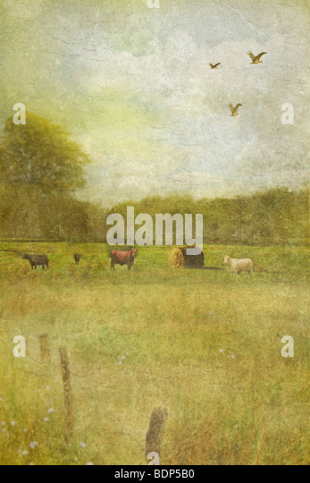 gentle country scene with fields and trees and some farm animals - Stock-Bilder