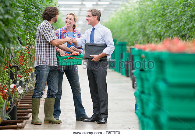 Businessman and growers with crate of tomatoes handshaking in greenhouse - Stock-Bilder