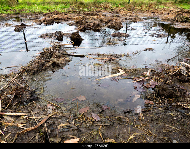 Mud puddle stock photos mud puddle stock images alamy for Dirty foot mud ranch