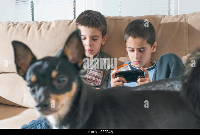 Two boys playing with their smartphones while dog standing in the foreground - Stock-Bilder