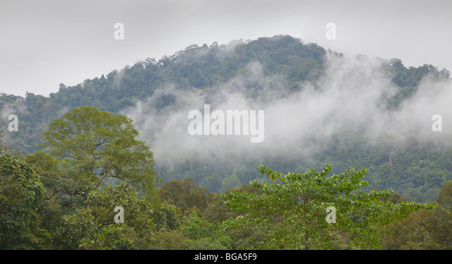 Steamy humid rainforest scene, overcast sky, Malaysia - Stock-Bilder