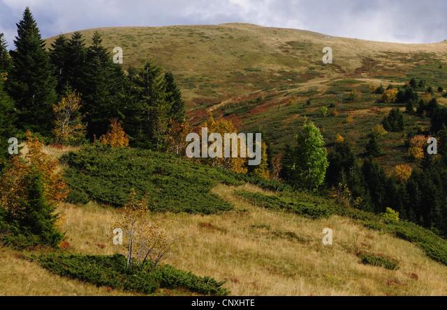 mountain meadow autumn above - photo #5