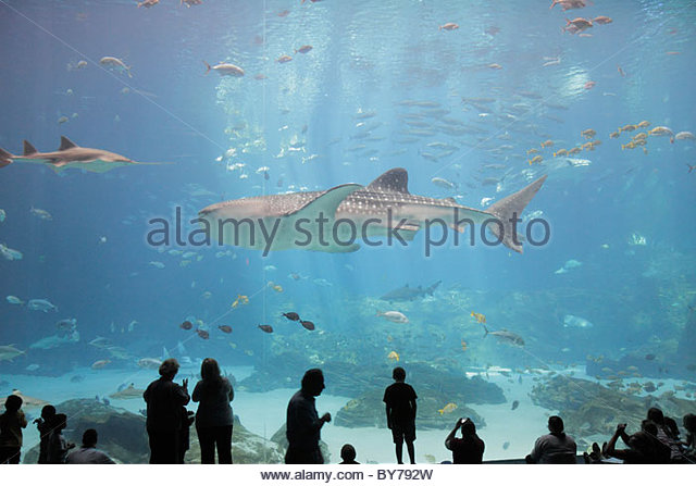 Atlanta Georgia Pemberton Place Georgia Aquarium saltwater habitat marine life fish whale shark world's largest - Stock Image