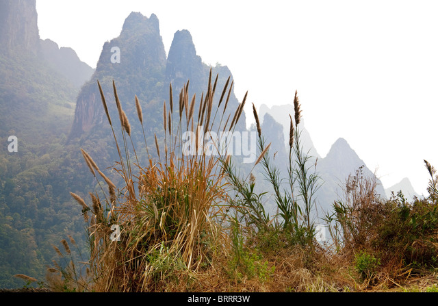 Grasses in the foreground overlook the dramatic peaks of karst-type mountains in Laos. - Stock Image