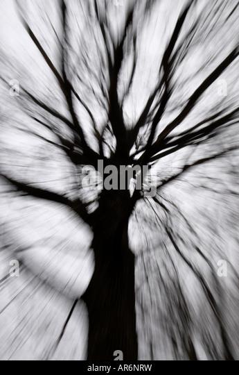 Tree blur / zoom effect. - Stock Image
