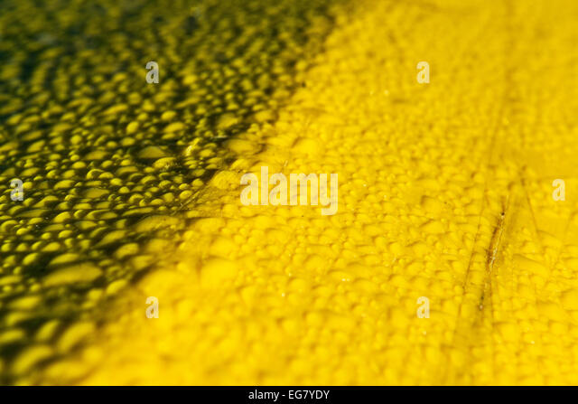 Water beading up on a yellow plastic surface. - Stock Image