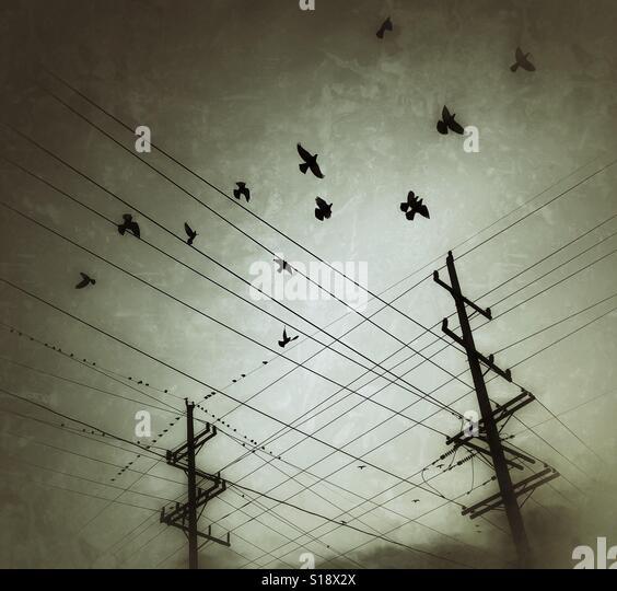 Birds and telephone lines - Stock-Bilder
